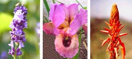 escencias florales3